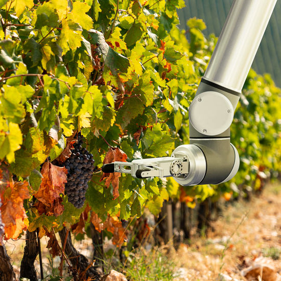 The robot arm is working in the vineyard. Smart farming and digital agriculture.